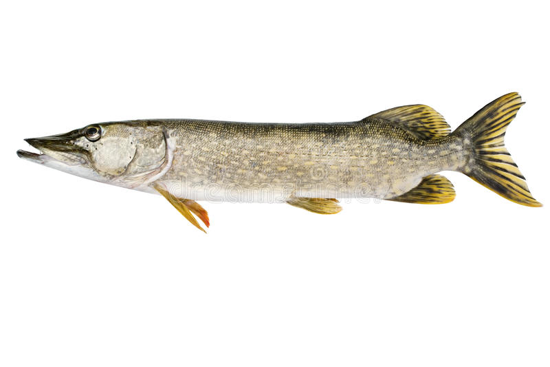 鱼矛 免版税图库摄影