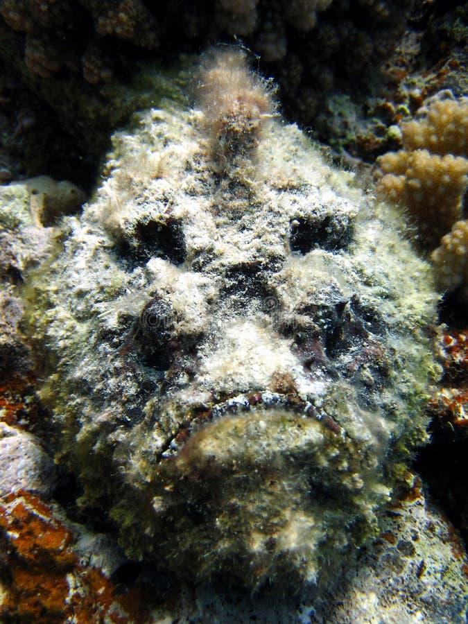 鱼石头 免版税库存图片