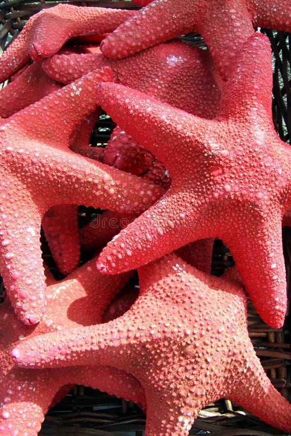 鱼红色星形 库存照片