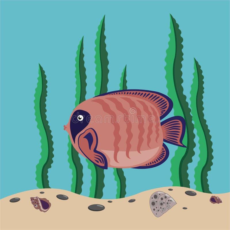鱼红色 向量例证