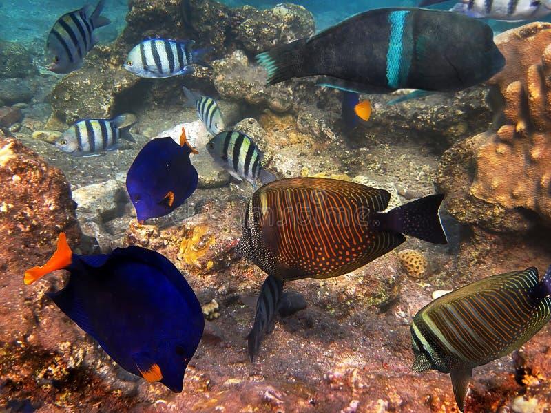 鱼红色sea1 库存照片