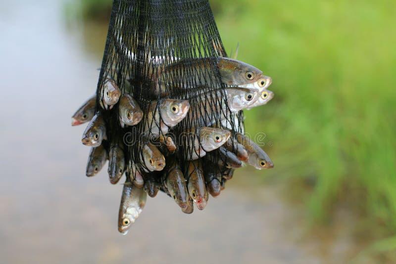 鱼网格 库存图片