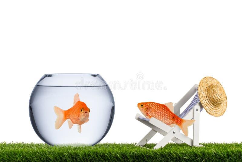 鱼自由概念 图库摄影