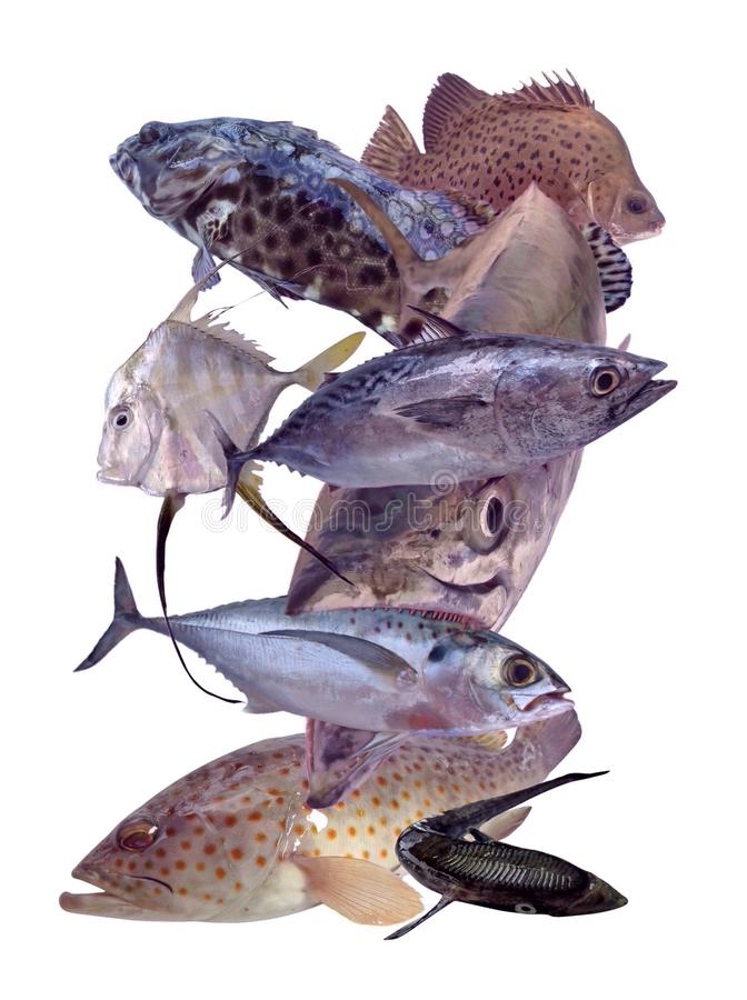 鱼设置了热带 免版税图库摄影