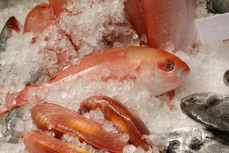 鱼贩子梭鱼红色s平板 免版税库存图片