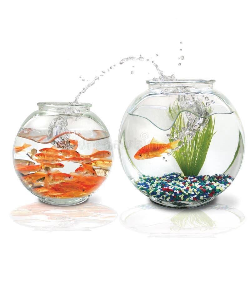 鱼跳 免版税库存照片