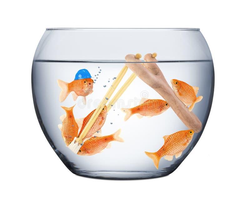 鱼配合概念 库存照片