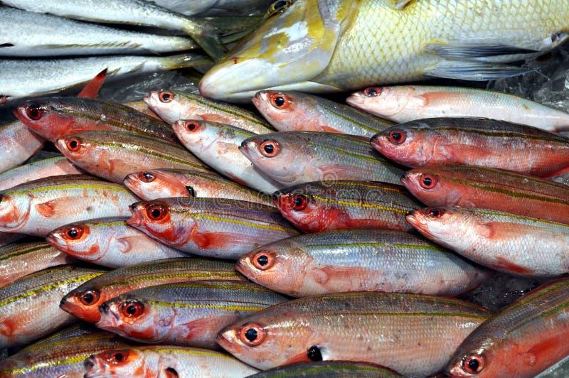 鱼销售额 免版税库存图片