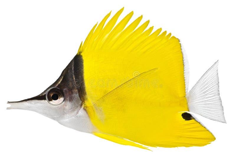 鱼镊子 图库摄影