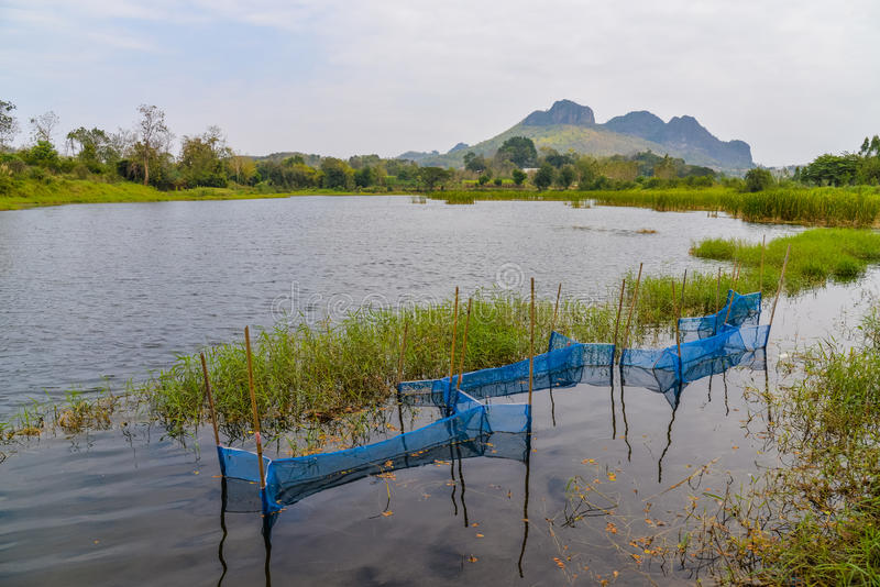 鱼陷井池塘自然 库存照片
