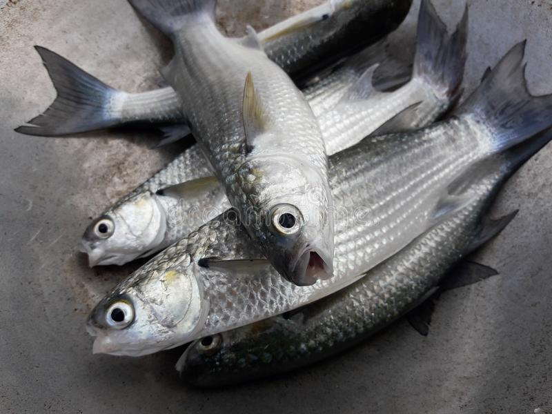 鱼食物准备 免版税库存图片