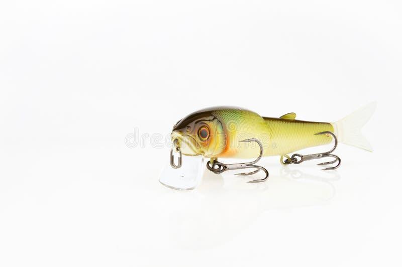 鱼饵和齿轮传染性的掠食性鱼的 免版税库存照片