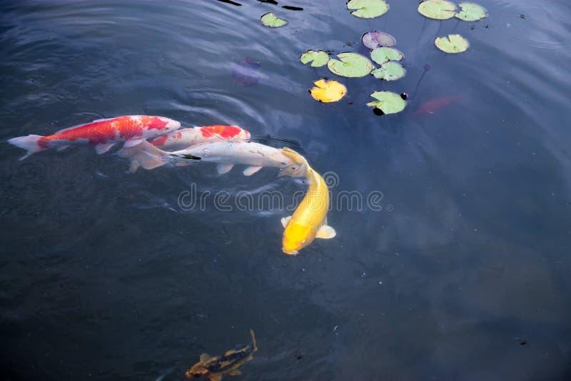 鱼,湖,水,五元美钞,自然,动物园 库存图片