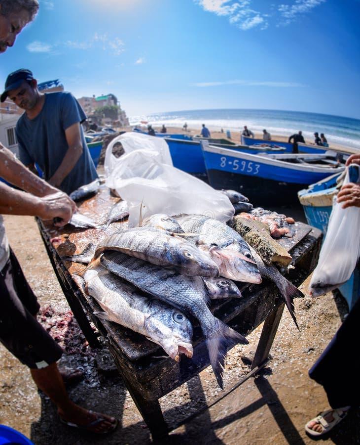 鱼贩子在Taghazout冲浪村庄,阿加迪尔,摩洛哥2 免版税库存照片