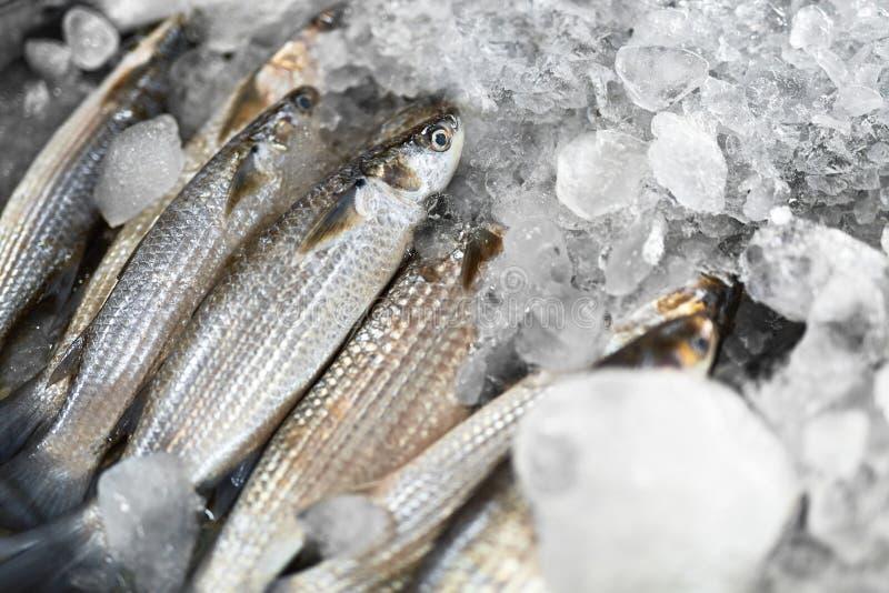鱼 灰鲻鱼,冰 海鲜 健康食物吃 营养 图库摄影