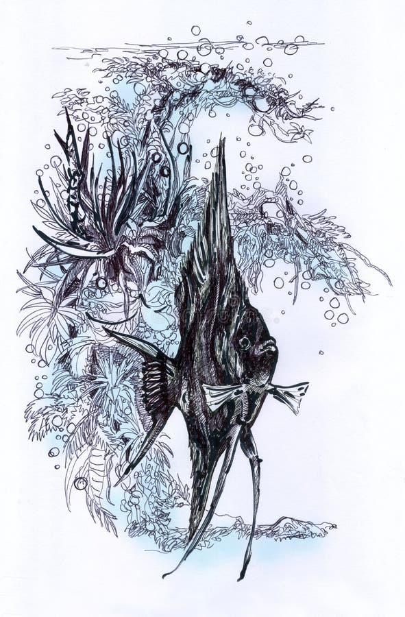 鱼Pterophyllum scalare,水族馆图画 向量例证
