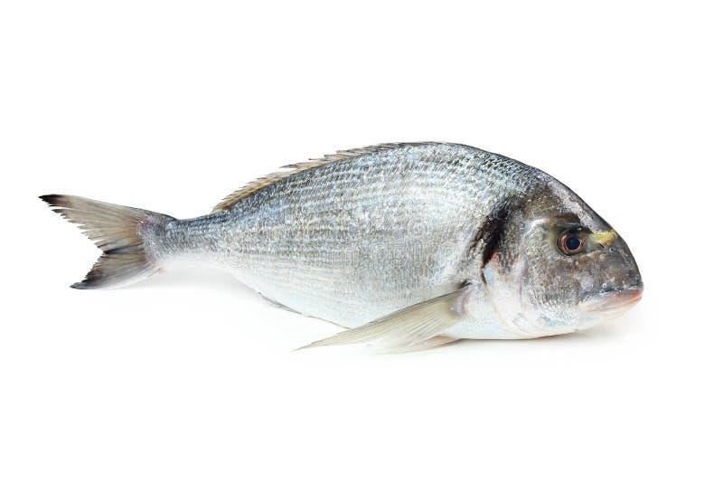 鲂鱼镀金面迎浪 库存照片