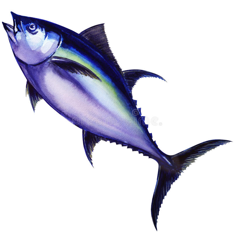 鲔鱼鱼 多孔黏土更正高绘画photoshop非常质量扫描水彩 向量例证