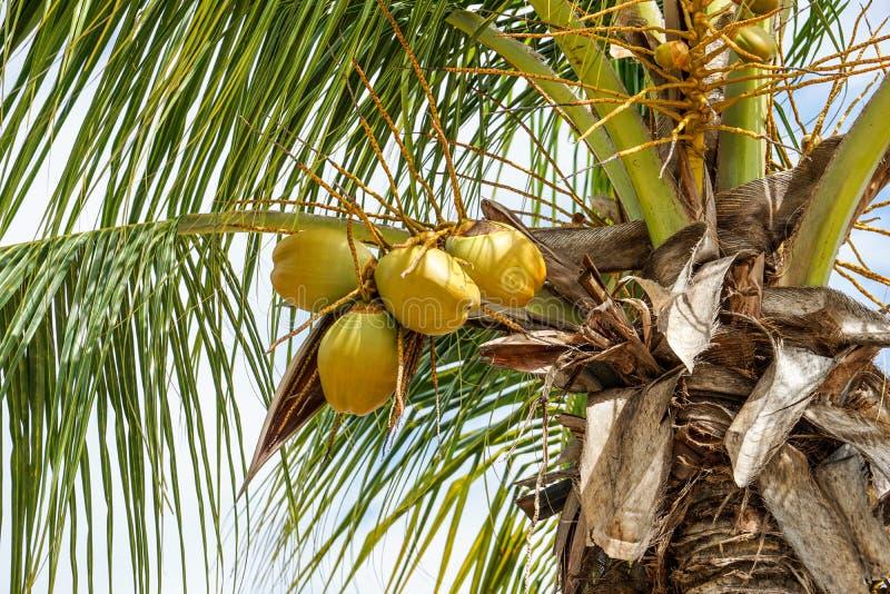 鲜亮的棕榈古巴 库存图片