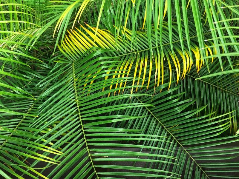 鲜亮的棕榈叶状体离开背景 E 免版税库存照片