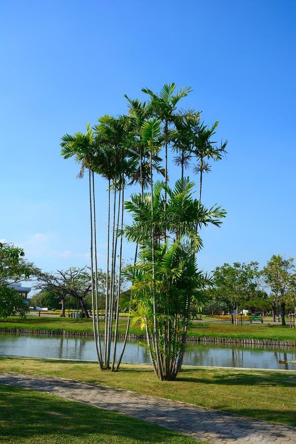 鲜亮的棕榈树的关闭在庭院有蓝天背景 免版税库存图片