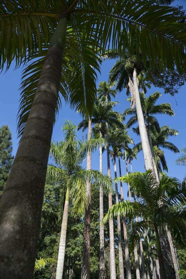 鲜亮的棕榈植物园里约棕榈树大道  免版税库存图片