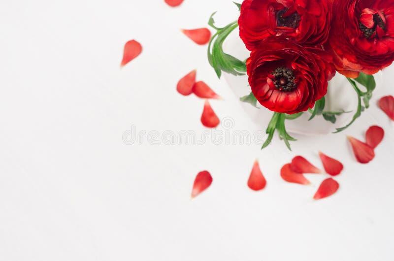 鲜红毛茛在花瓶开花有在软的白色木桌上的瓣顶视图 高雅春天花束 免版税库存照片