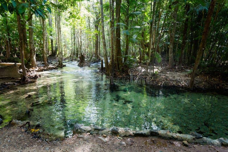 鲜绿色水池国家公园Krabi 库存照片