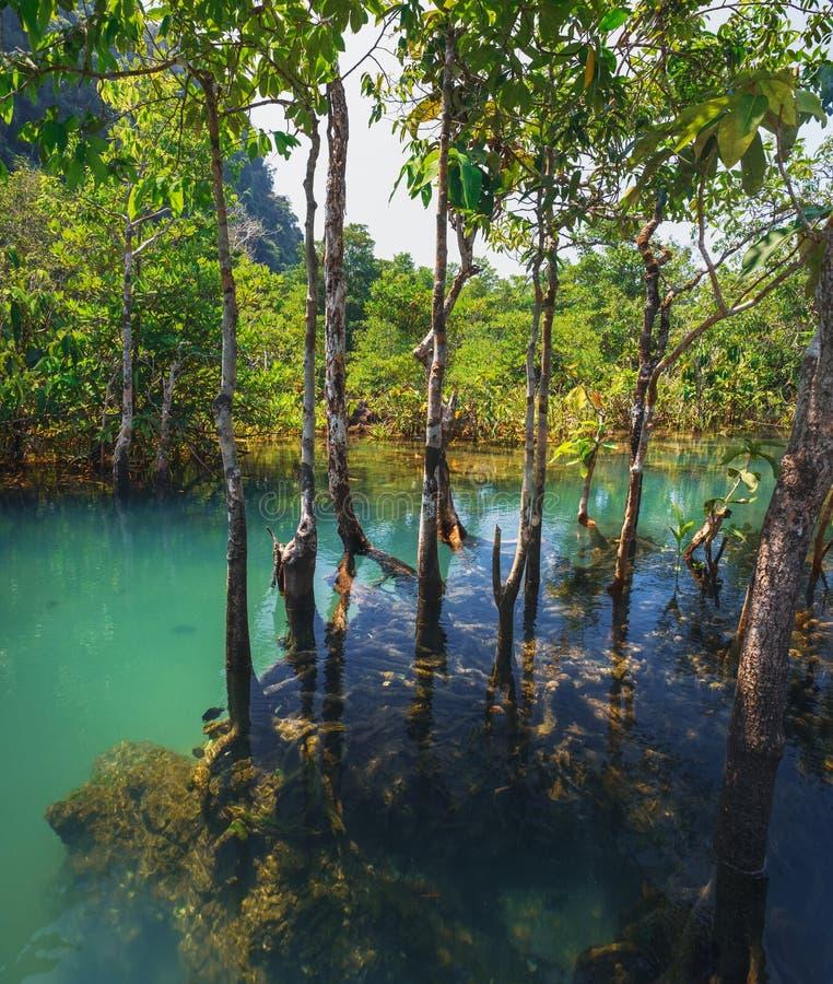 鲜绿色水池在甲米府,泰国 免版税库存照片