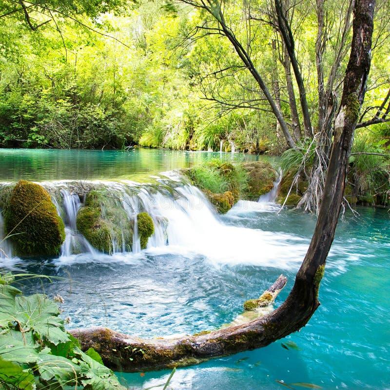 鲜绿色瀑布 库存图片