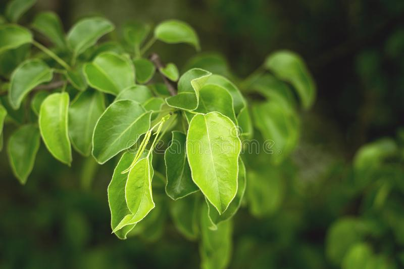 鲜绿色的树在高加索的森林里 免版税库存图片