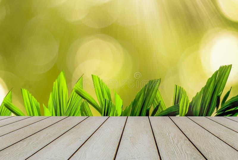 鲜绿色的棕榈叶开始春天,有与阳光和木地板的黄色和明亮的bokeh的 免版税库存图片