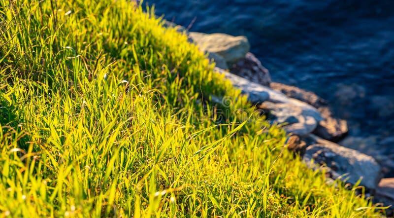 鲜绿色的草特写镜头视图、多岩石的海滩和蓝色海水背景 免版税库存照片