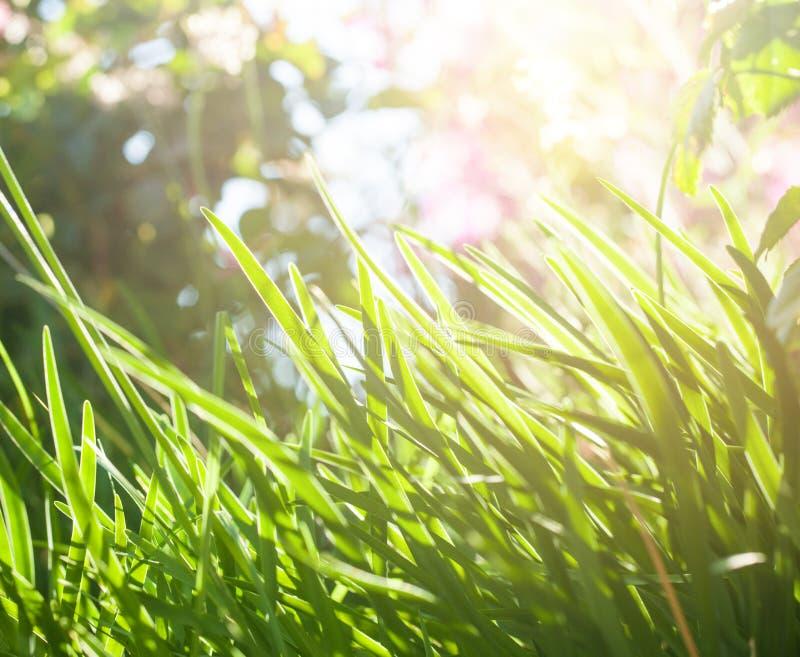 鲜绿色的草背景在好日子 图库摄影