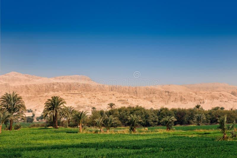 鲜绿色的领域与天空蔚蓝和干燥黄色沙漠山,埃及形成对比 库存照片