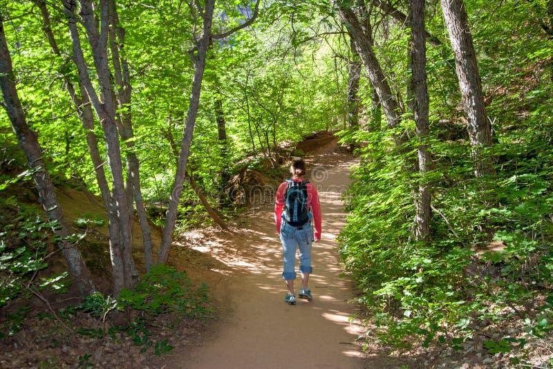 鲜绿色秋天的少女在锡安国家公园落后 免版税库存照片