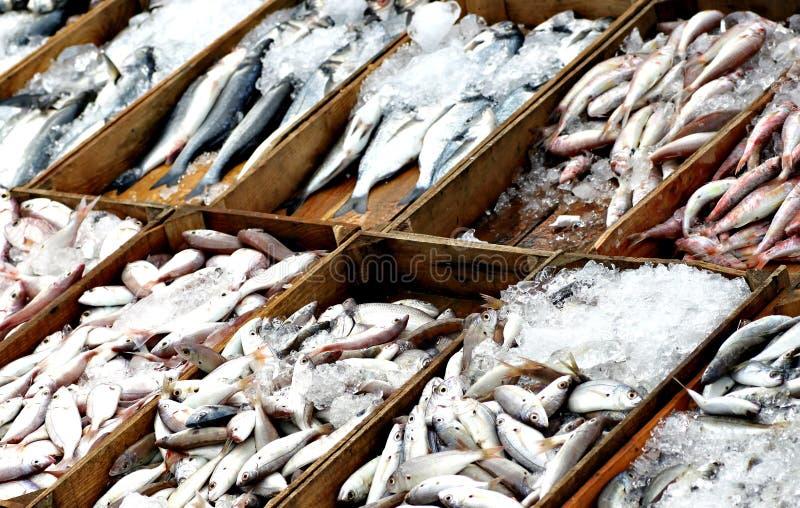 鲜鱼在鱼市上 库存照片