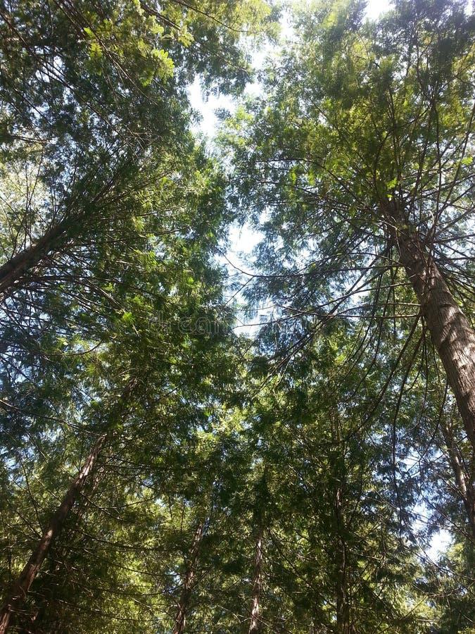 鲜绿色天花板 图库摄影