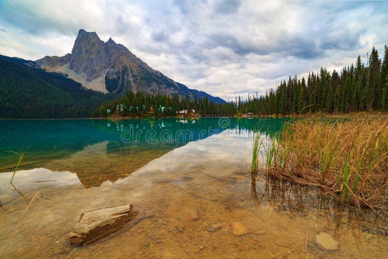 鲜绿色湖反射 库存照片