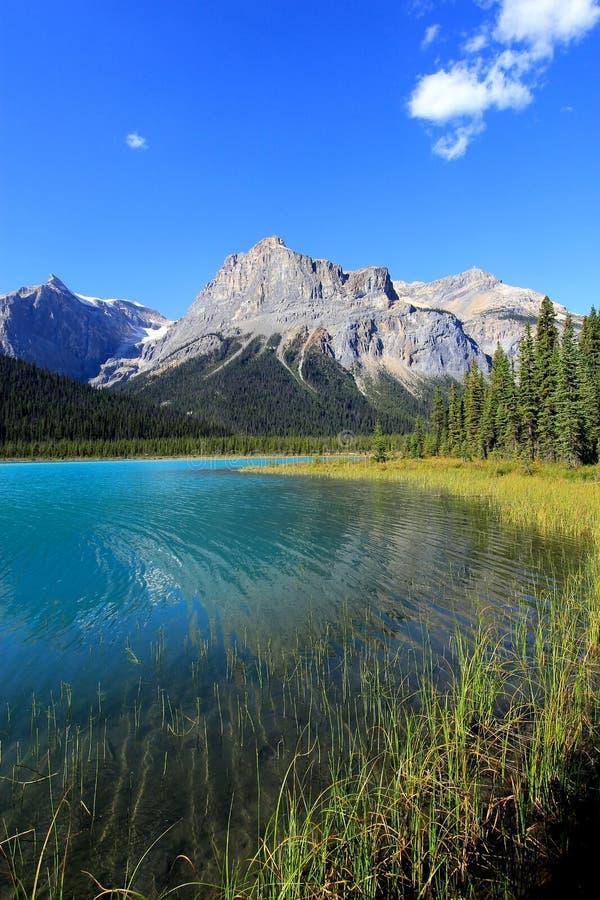 鲜绿色湖,幽鹤国家公园,不列颠哥伦比亚省,加拿大 免版税库存图片