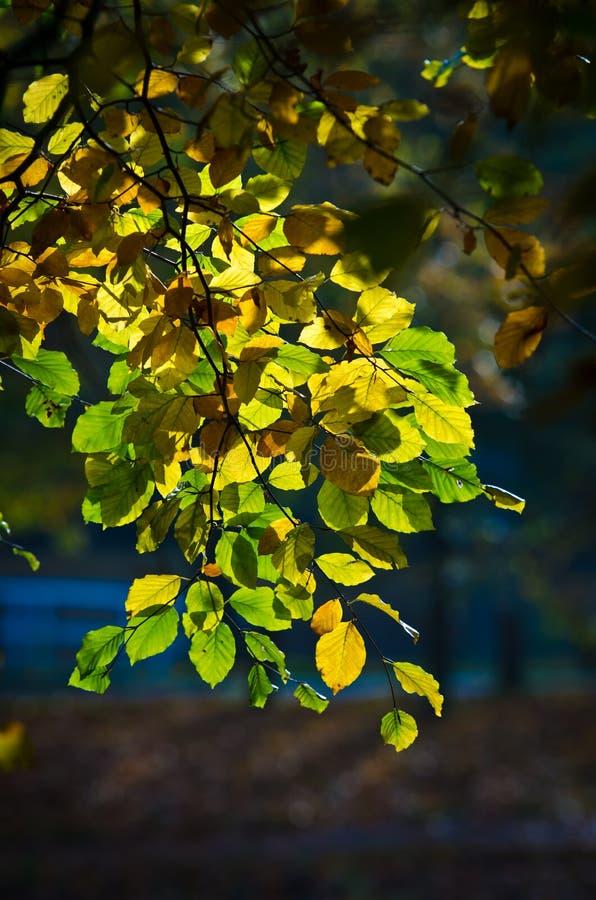 鲜绿色的叶子黄色 库存图片