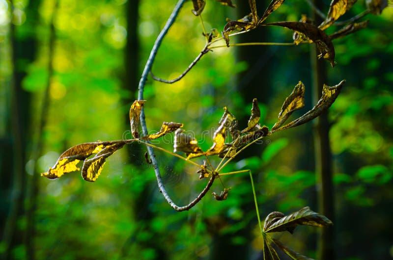 鲜绿色的叶子黄色 免版税库存图片