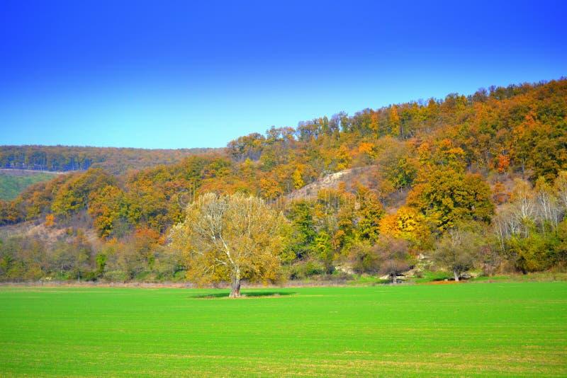 鲜绿色的领域秋天森林视图 免版税图库摄影