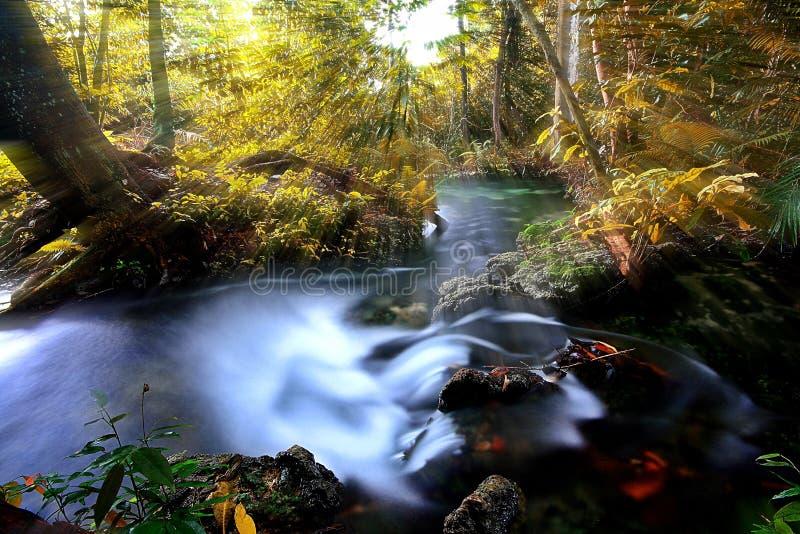 鲜绿色水池。Krabi,泰国 库存图片