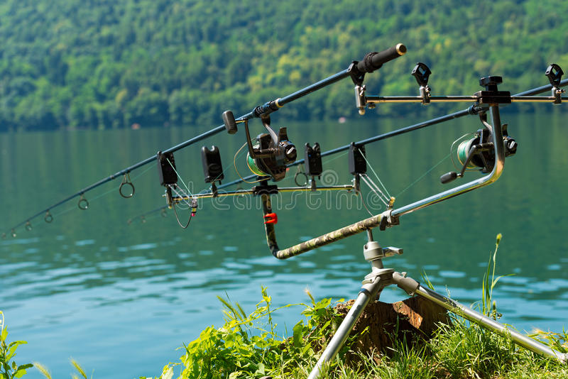 鲤鱼有卷轴的钓鱼竿在支持系统 库存图片