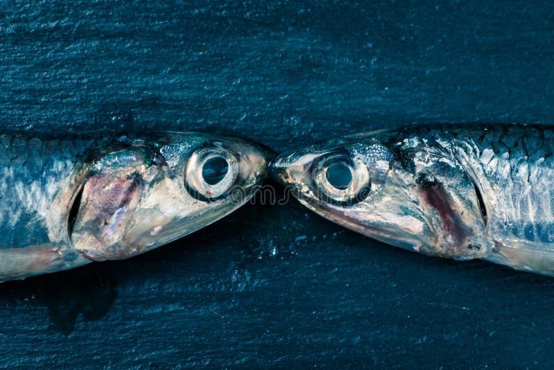 鲥鱼亲吻 免版税库存照片