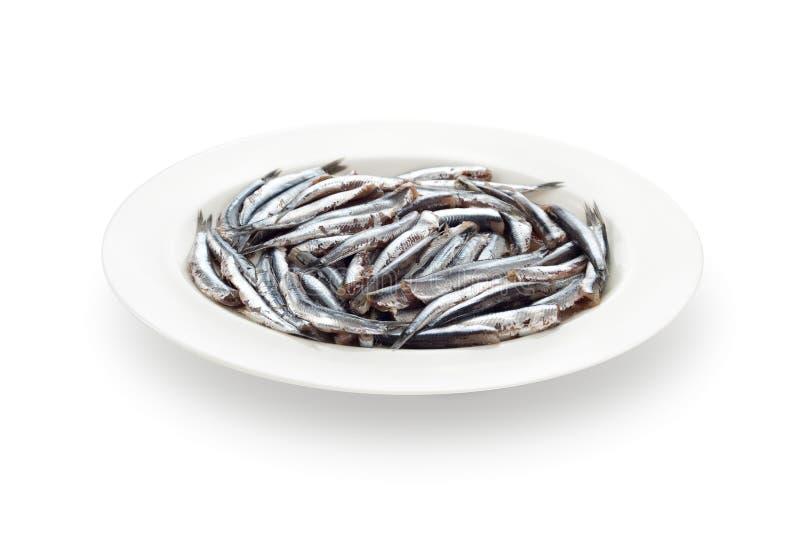 鲥鱼断送新准备的海鲜白色 免版税图库摄影