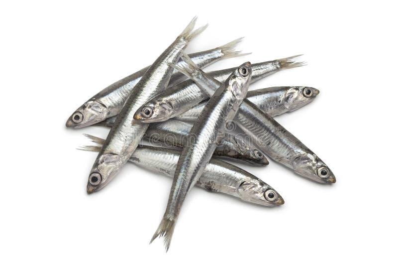 鲥鱼欧洲新鲜原始 免版税图库摄影