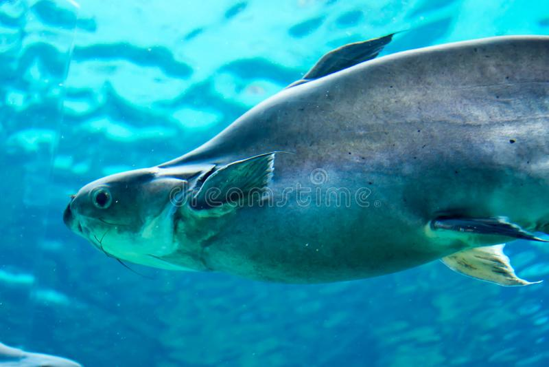 鲨鱼、黄貂鱼和其他鱼在新加坡水下的海 免版税库存照片