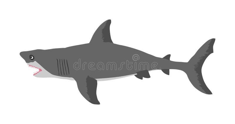 鲨鱼在白色背景隔绝的传染媒介例证 向量例证